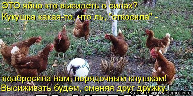 """Котоматрица: ЭТО яйцо кто высидеть в силах? Кукушка какая-то, что ль, """"откосила"""" - подбросила нам, порядочным клушкам! Высиживать будем, сменяя друг дружку."""