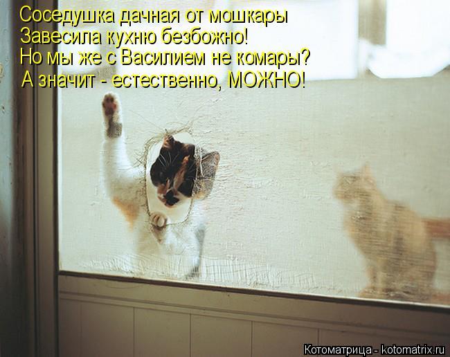 Котоматрица: Соседушка дачная от мошкары Завесила кухню безбожно! Но мы же с Василием не комары? А значит - естественно, МОЖНО!