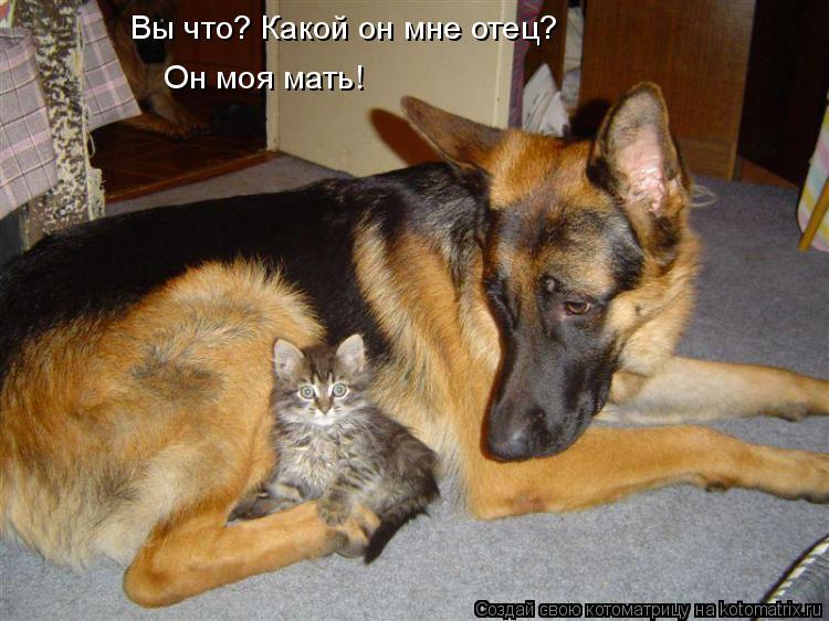 Котоматрица: Вы что? Какой он мне отец? Он моя мать!