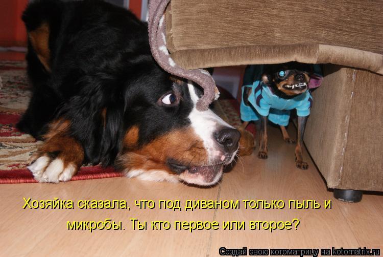 Котоматрица: Хозяйка сказала, что под диваном только пыль и микробы. Ты кто первое или второе?