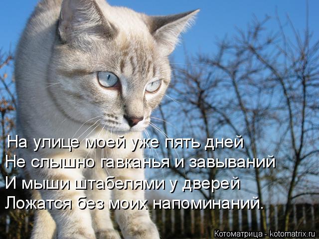 Котоматрица: На улице моей уже пять дней  Не слышно гавканья и завываний  И мыши штабелями у дверей Ложатся без моих напоминаний.