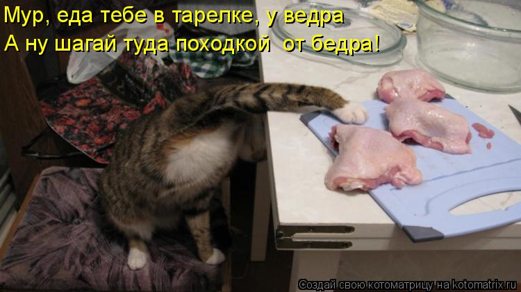 Котоматрица: Мур, еда тебе в тарелке, у ведра А ну шагай туда походкой  от бедра!
