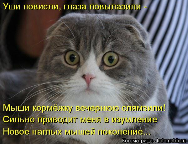 Котоматрица: Уши повисли, глаза повылазили - Мыши кормёжку вечернюю слямзили! Сильно приводит меня в изумление Новое наглых мышей поколение...