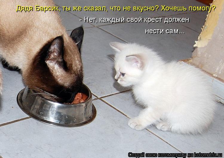Котоматрица: Дядя Барсик, ты же сказал, что не вкусно? Хочешь помогу? - Нет, каждый свой крест должен нести сам...