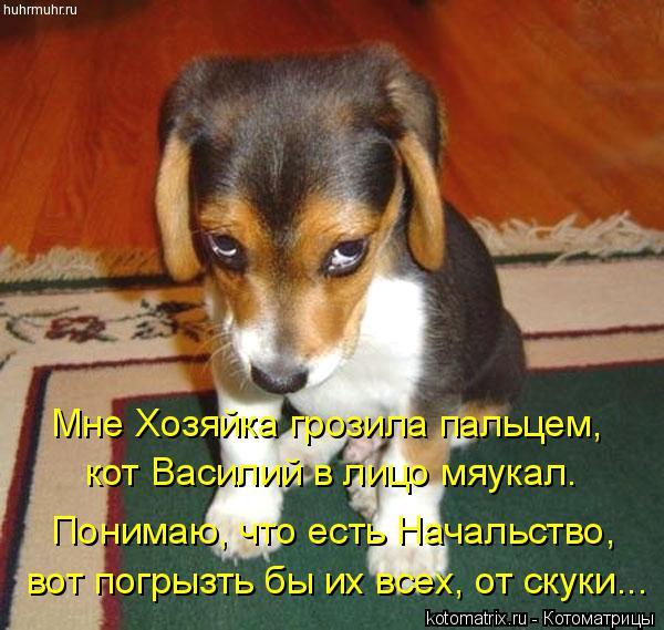 Котоматрица: Мне Хозяйка грозила пальцем, кот Василий в лицо мяукал. Понимаю, что есть Начальство, вот погрызть бы их всех, от скуки...