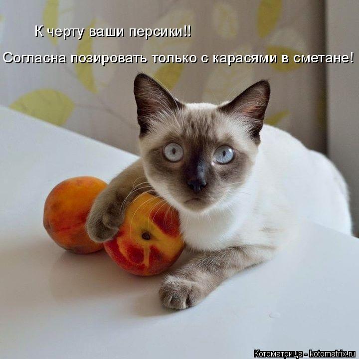 Котоматрица: К черту ваши персики!! Согласна позировать только с карасями в сметане!