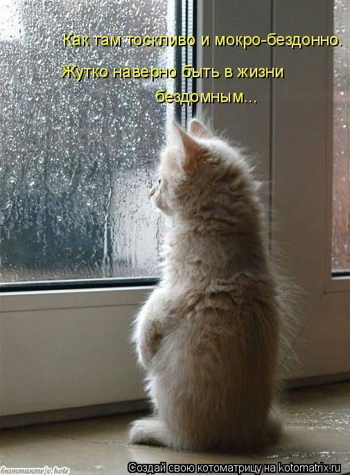 Котоматрица: Как там тоскливо и мокро-бездонно. Жутко наверно быть в жизни бездомным...