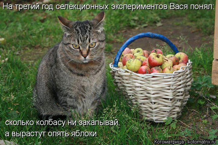 Котоматрица: На третий год селекционных экспериментов Вася понял:  сколько колбасу ни закапывай, а вырастут опять яблоки