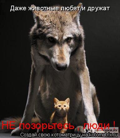 Котоматрица: Даже животные любят и дружат  НЕ позорьтесь , люди !