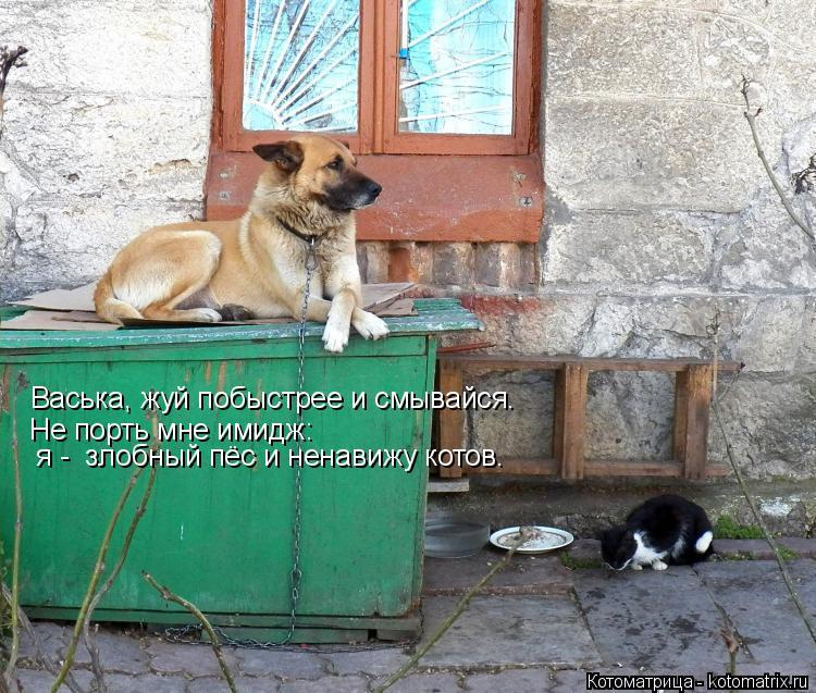 Котоматрица: Васька, жуй побыстрее и смывайся. Не порть мне имидж:  я -  злобный пёс и ненавижу котов.