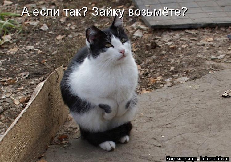 Котоматрица: А если так? Зайку возьмёте?