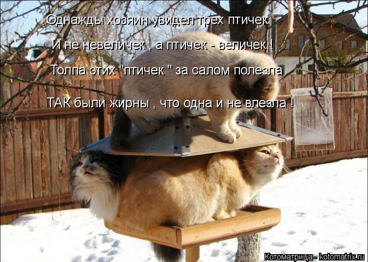 """Котоматрица: Однажды хозяин увидел трех птичек И не невеличек , а птичек - величек ! Толпа этих """"птичек """" за салом полезла  ТАК были жирны , что одна и не вле"""