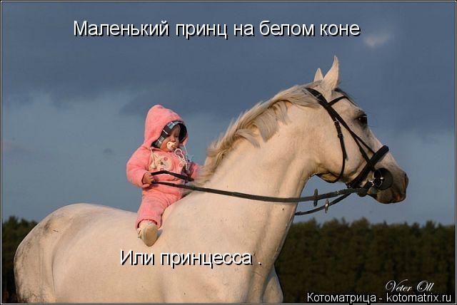Котоматрица: Маленький принц на белом коне Или принцесса .