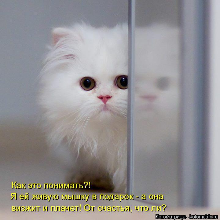 Котоматрица: Как это понимать?! Я ей живую мышку в подарок - а она визжит и плачет! От счастья, что ли?