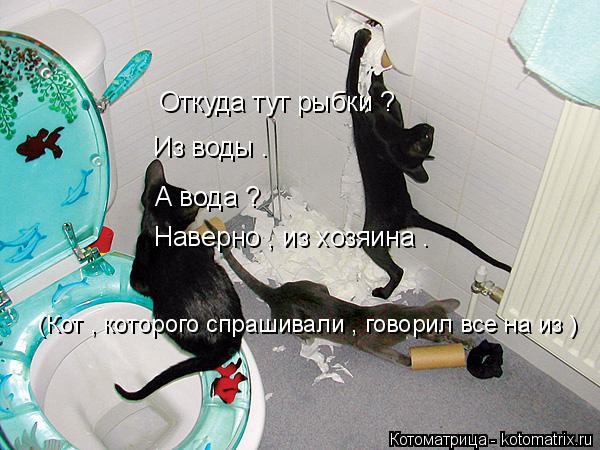 Котоматрица: Откуда тут рыбки ? Из воды . А вода ? Наверно , из хозяина . (Кот , которого спрашивали , говорил все на из )