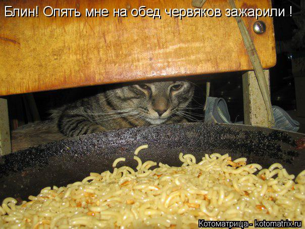 Котоматрица: Блин! Опять мне на обед червяков зажарили !