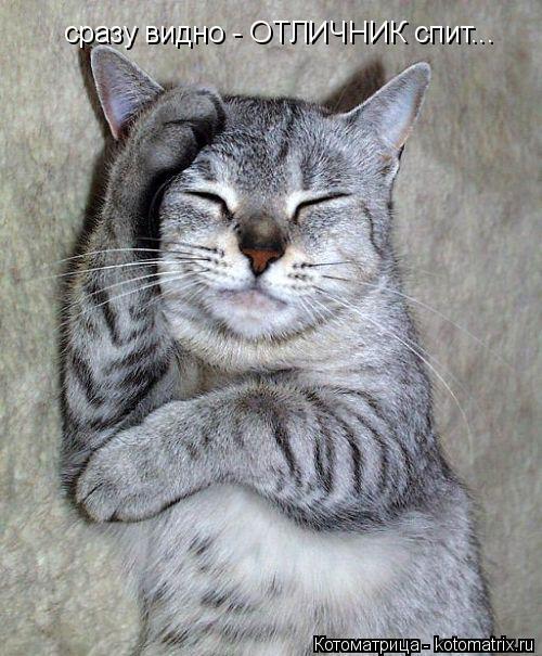 Котоматрица: сразу видно - ОТЛИЧНИК спит...
