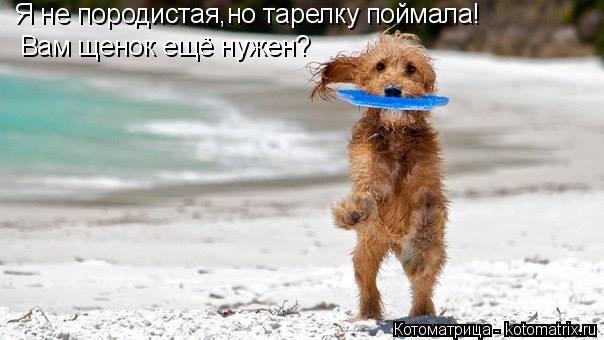 Котоматрица: Я не породистая,но тарелку поймала! Вам щенок ещё нужен?
