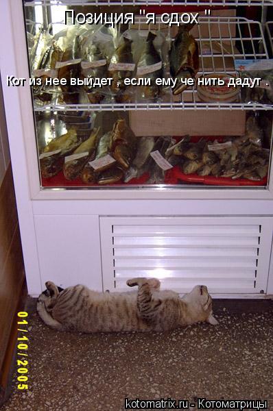 """Котоматрица: Позиция """"я сдох """" Кот из нее выйдет , если ему че нить дадут ."""