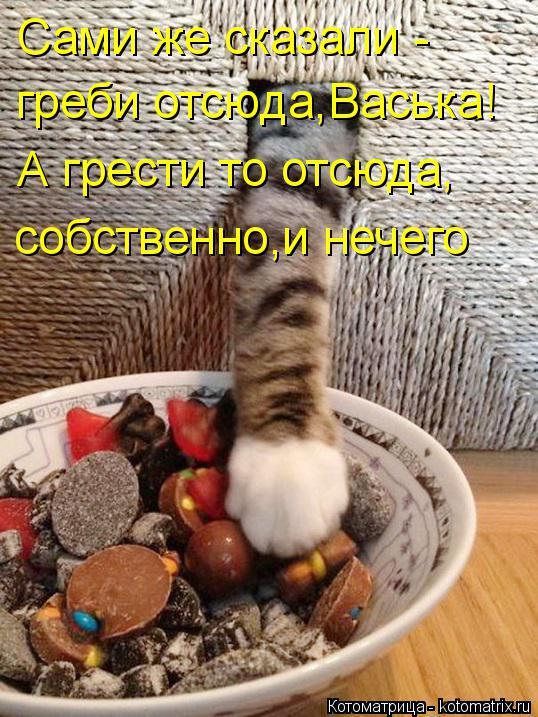 Котоматрица: Сами же сказали - греби отсюда,Васька! А грести то отсюда, собственно,и нечего