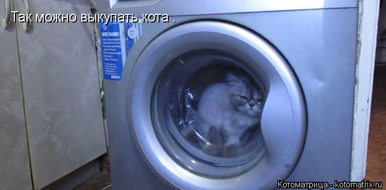 Котоматрица: Так можно выкупать кота .
