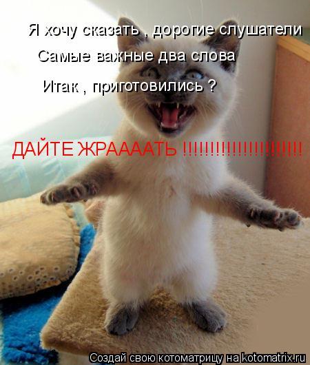 Котоматрица: Я хочу сказать , дорогие слушатели  Самые важные два слова Итак , приготовились ? ДАЙТЕ ЖРААААТЬ !!!!!!!!!!!!!!!!!!!!!!