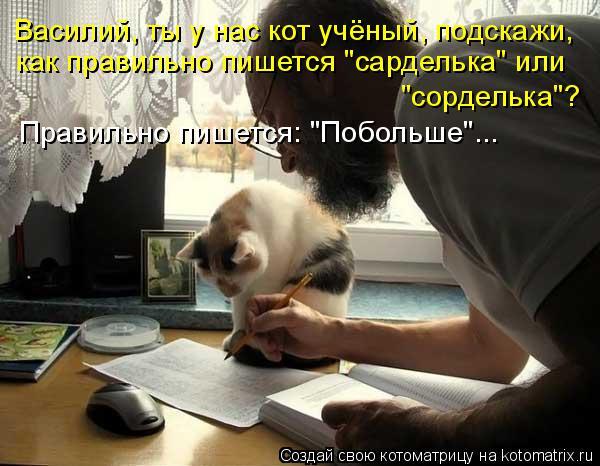 """Котоматрица: Василий, ты у нас кот учёный, подскажи, как правильно пишется """"сарделька"""" или  """"сорделька""""?  Правильно пишется: """"Побольше""""..."""