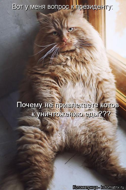 Котоматрица: Вот у меня вопрос к президенту: Почему не привлекаете котов  к уничтожению еды???