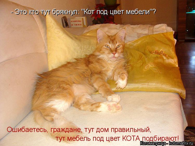 """Котоматрица: - Это кто тут брякнул: """"Кот под цвет мебели""""? Ошибаетесь, граждане, тут дом правильный,  тут мебель под цвет КОТА подбирают!"""