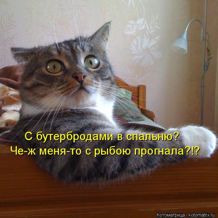 Котоматрица: С бутербродами в спальню? Че-ж меня-то с рыбою прогнала?!?