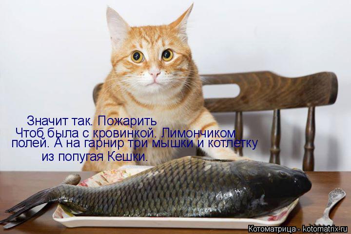 Котоматрица: Значит так. Пожарить Чтоб была с кровинкой. Лимончиком полей. А на гарнир три мышки и котлетку из попугая Кешки.