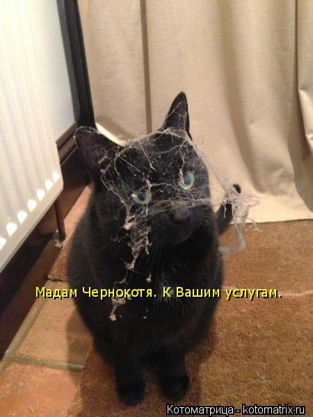 Котоматрица: Мадам Чернокотя. К Вашим услугам.