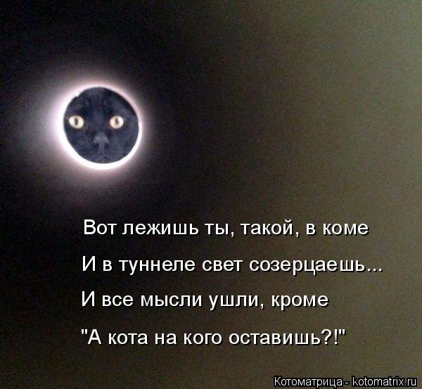"""Котоматрица: Вот лежишь ты, такой, в коме И в туннеле свет созерцаешь... И все мысли ушли, кроме """"А кота на кого оставишь?!"""""""