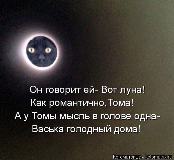 Котоматрица: Он говорит ей- Вот луна! Как романтично,Тома! А у Томы мысль в голове одна- Васька голодный дома!