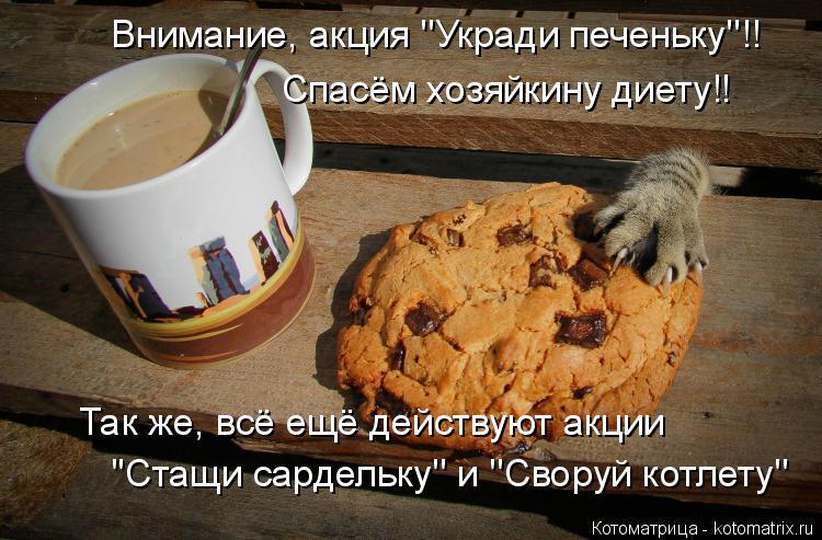 Котоматрица: Внимание, акция ''Укради печеньку''!! Спасём хозяйкину диету!! Так же, всё ещё действуют акции ''Стащи сардельку'' и ''Своруй котлету''