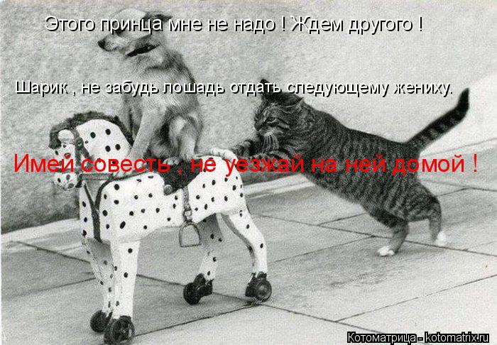 Котоматрица: Этого принца мне не надо ! Ждем другого ! Шарик , не забудь лошадь отдать следующему жениху. Имей совесть , не уезжай на ней домой !