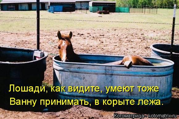 Котоматрица: Лошади, как видите, умеют тоже Ванну принимать, в корыте лежа.