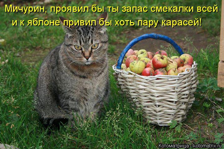 Котоматрица: Мичурин, проявил бы ты запас смекалки всей и к яблоне привил бы хоть пару карасей!