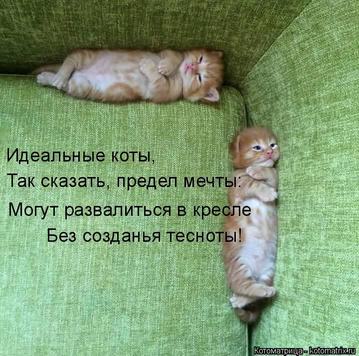 Котоматрица: Идеальные коты, Так сказать, предел мечты: Могут развалиться в кресле Без созданья тесноты!