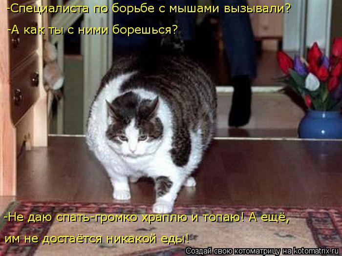 Котоматрица: -Специалиста по борьбе с мышами вызывали? -Не даю спать-громко храплю и топаю! А ещё,  им не достаётся никакой еды! -А как ты с ними борешься?