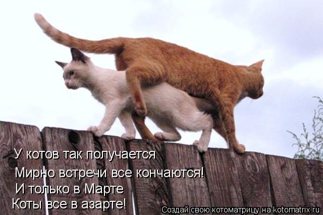 Как коты кончаются