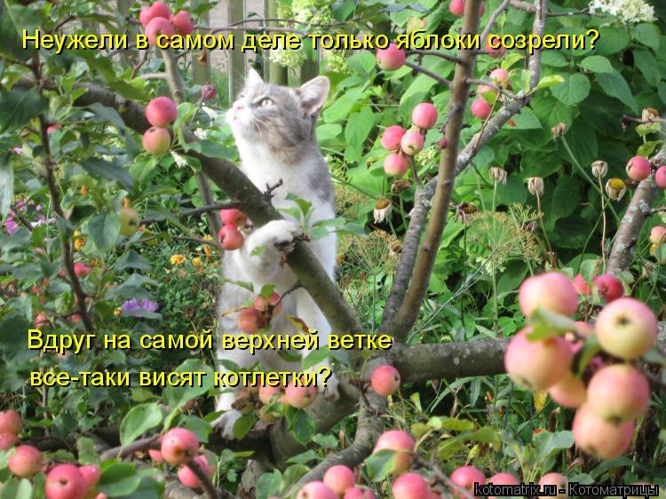 Котоматрица: Неужели в самом деле только яблоки созрели? Вдруг на самой верхней ветке  все-таки висят котлетки?