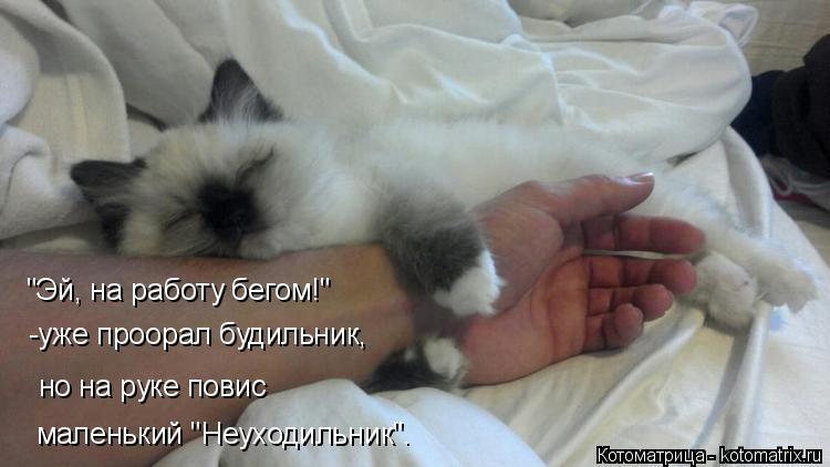 """Котоматрица: """"Эй, на работу бегом!"""" -уже проорал будильник, но на руке повис маленький """"Неуходильник""""."""