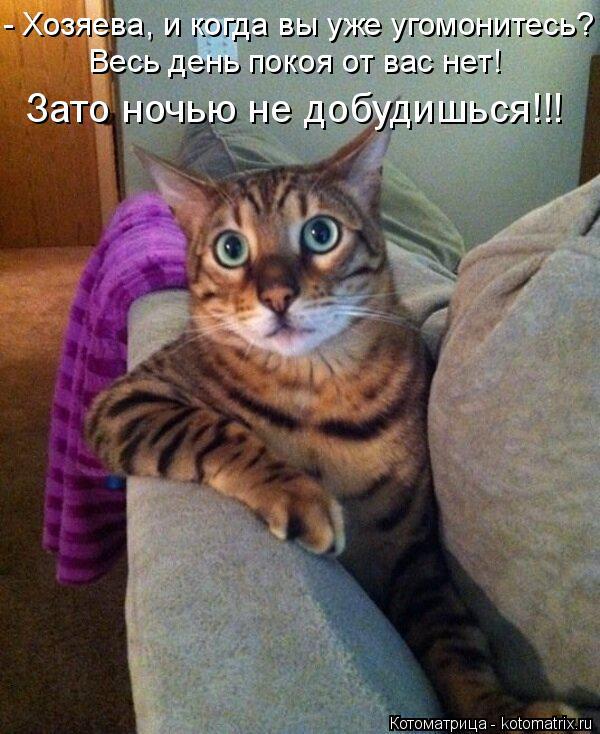 Котоматрица: - Хозяева, и когда вы уже угомонитесь? Весь день покоя от вас нет! Зато ночью не добудишься!!!