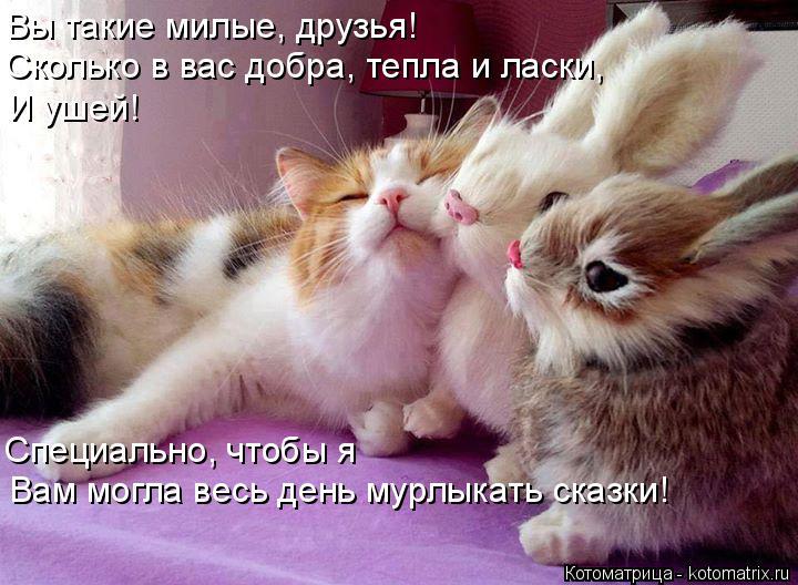 Котоматрица: Вы такие милые, друзья! Сколько в вас добра, тепла и ласки, И ушей! Специально, чтобы я Вам могла весь день мурлыкать сказки!