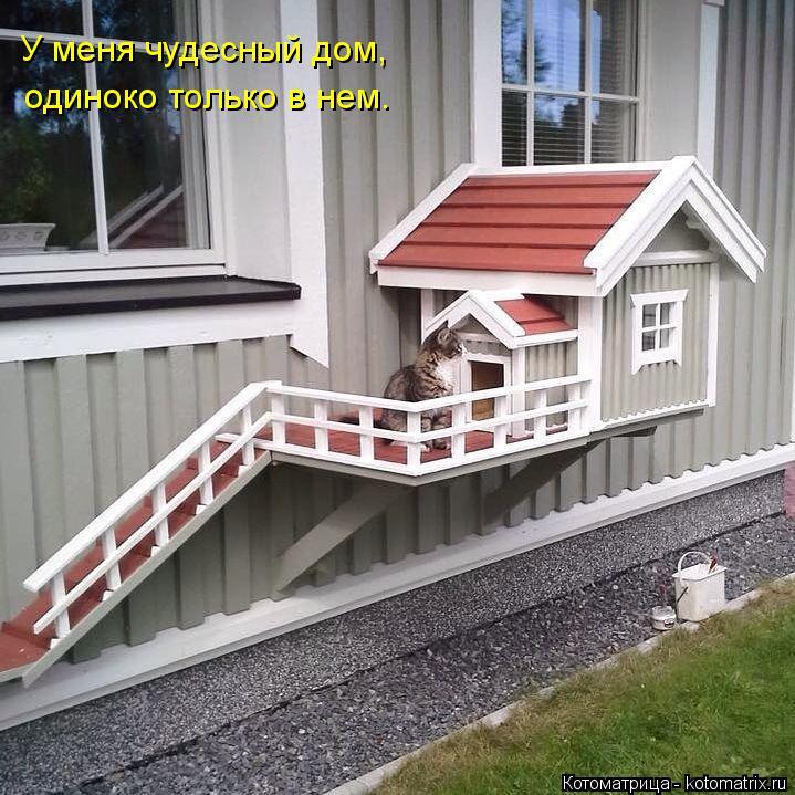 Котоматрица: У меня чудесный дом, одиноко только в нем.