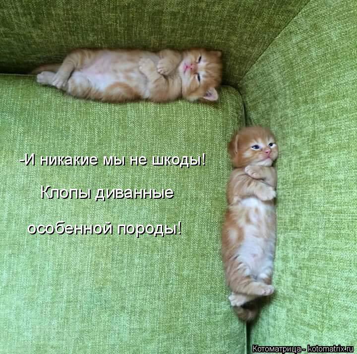 Котоматрица: -И никакие мы не шкоды! Клопы диванные особенной породы!
