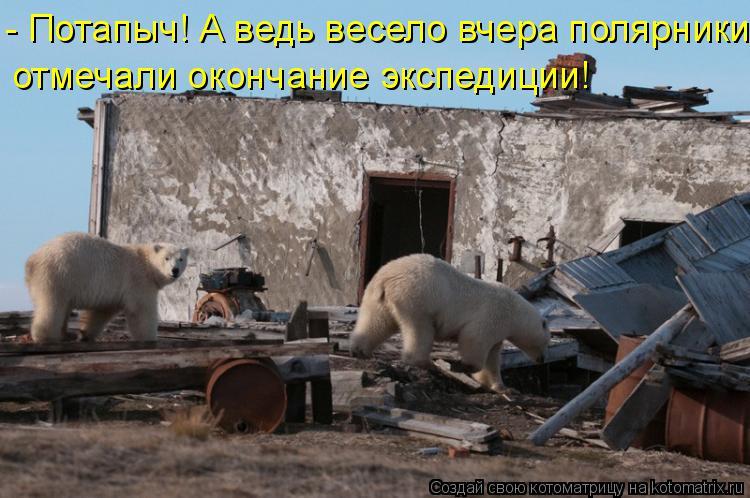 Котоматрица: - Потапыч! А ведь весело вчера полярники  отмечали окончание экспедиции!