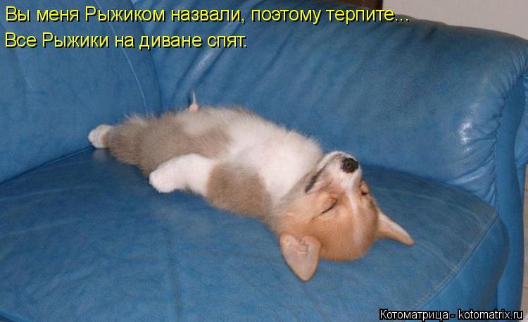 Котоматрица: Вы меня Рыжиком назвали, поэтому терпите... Все Рыжики на диване спят.