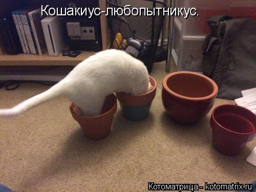 Котоматрица: Кошакиус-любопытникус.